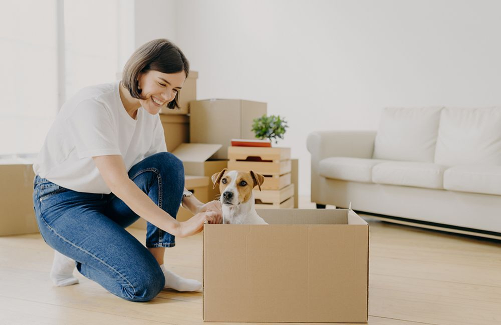 How to Move Pets to a New Home