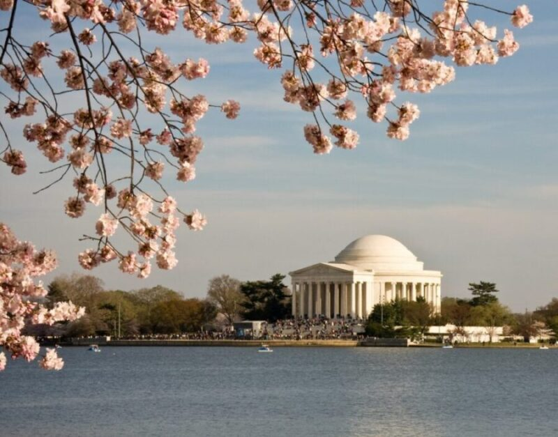Jefferson Monument in Washington DC with cherry blossoms